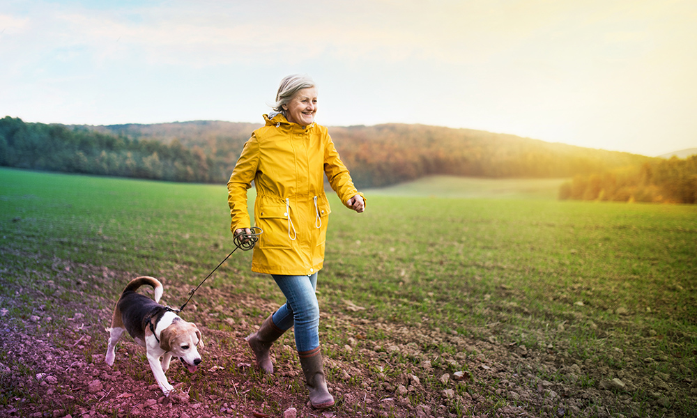 Mature lady walking her beagle dog in the countryside