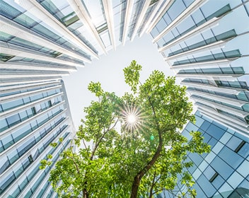 Sunlight beaming through a tree surrounded by a modern building